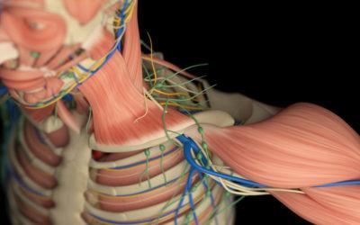 NeuroFascia Revealed