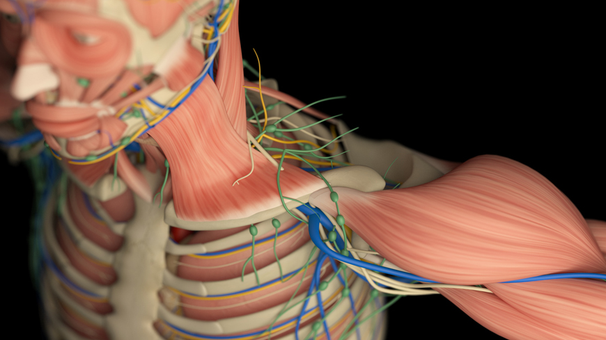 NeuroFascia Revealed